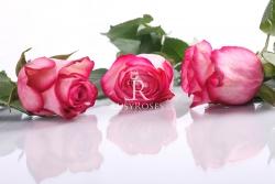 Carrousel (bielo - ružová)